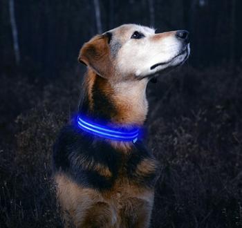 Obrázek Svítící obojek - modrý M