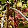 Obrázek z Zahradní nerezová hadice - 22,5m