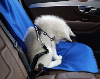 Obrázek Deka pro psa do auta