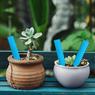 Obrázek z Popisovací štítky k rostlinám - modrá